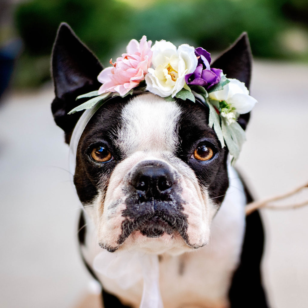 Best Wedding Ideas with your dog