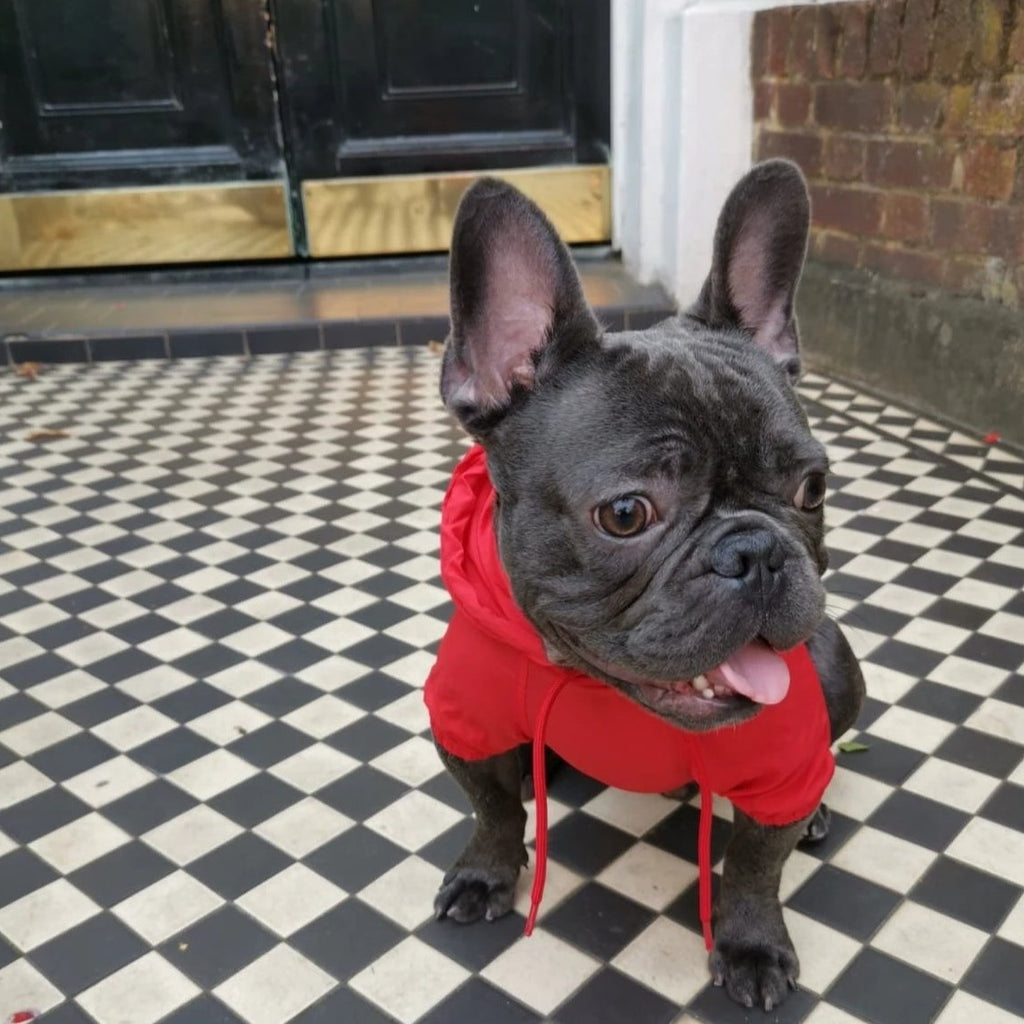 French bulldog Raincoat Red Colour - front view v2