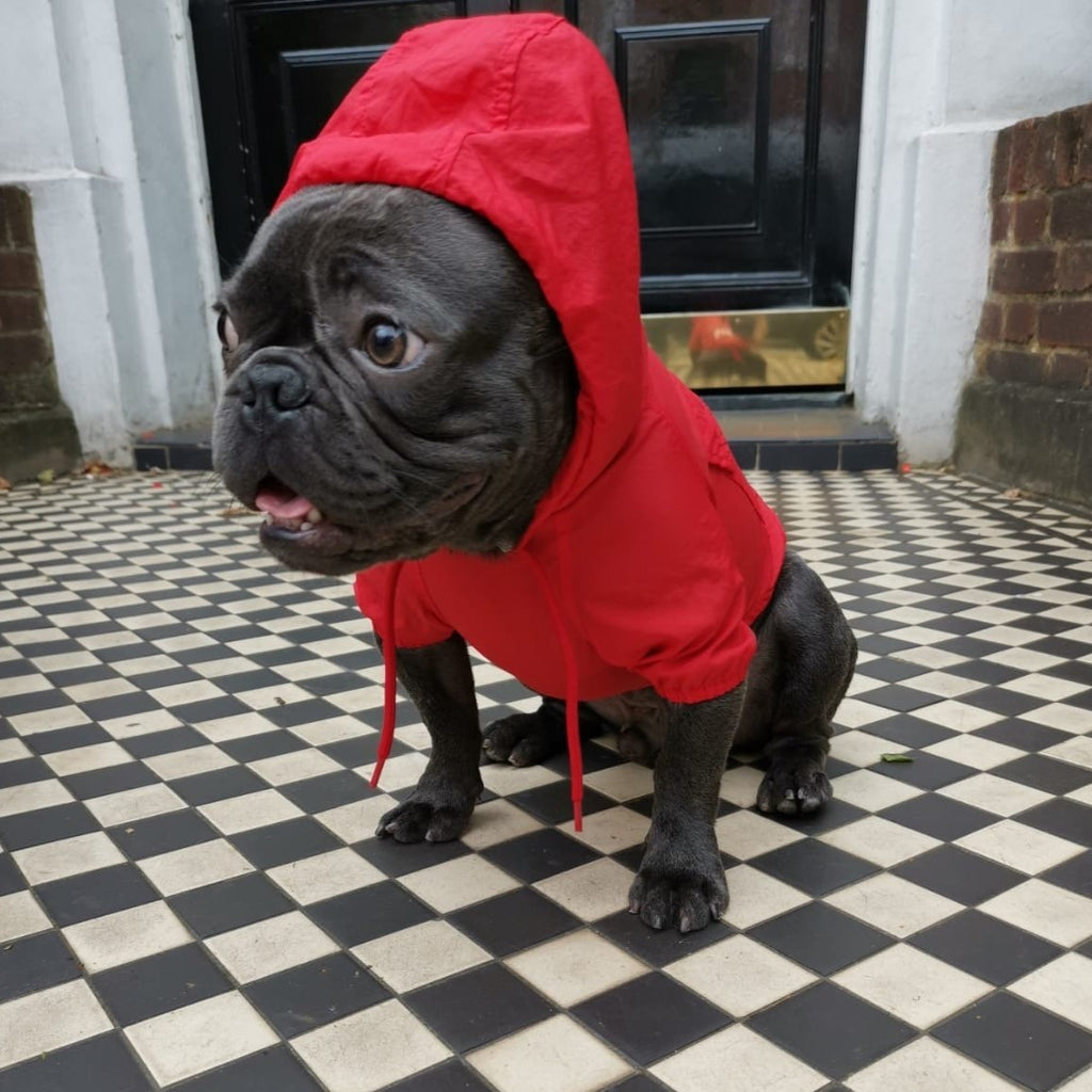 French bulldog Raincoat Red Colour - side view Hoodie on