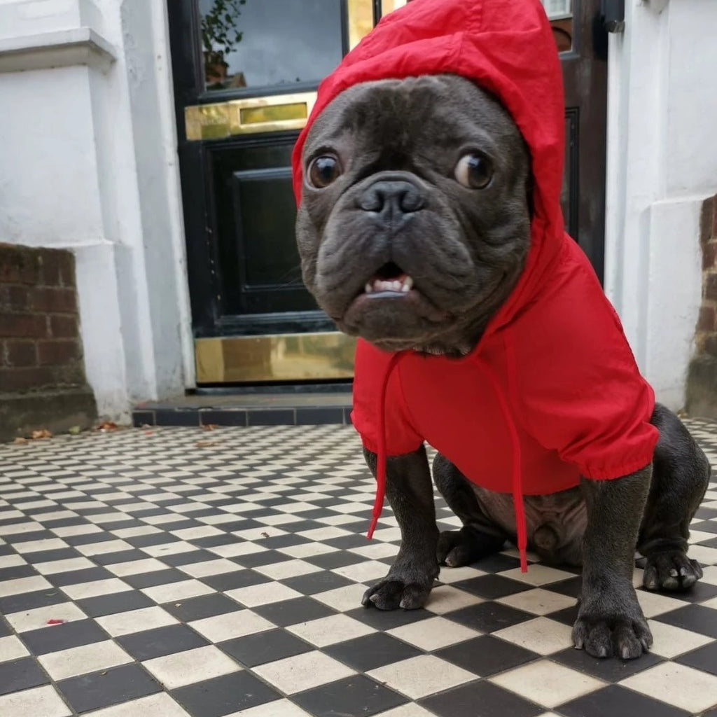 French bulldog Raincoat Red Colour - side view Hoodie on v2