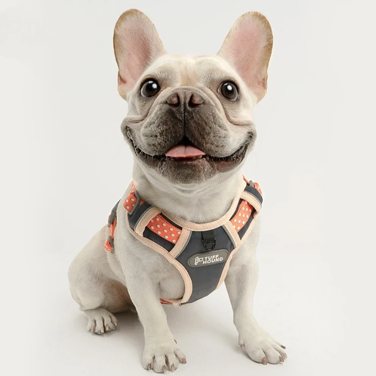 French Bulldog Nylon Harness - Model wearing Pink Colour