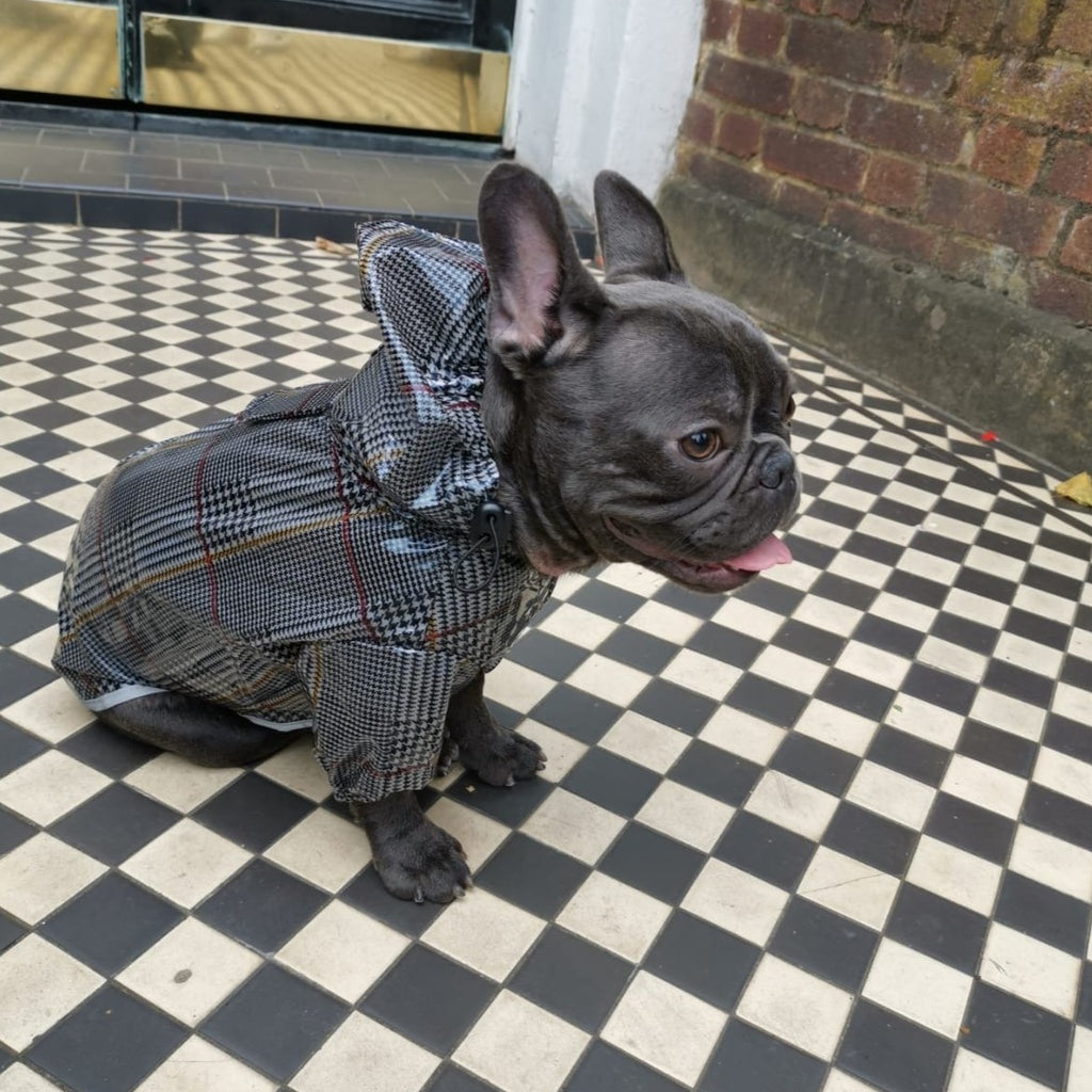 Dog Raincoat for French Bulldogs and Pugs, harness friendly - side view