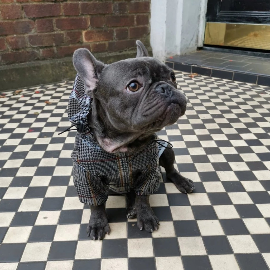 Dog Raincoat for French Bulldogs and Pugs - front view