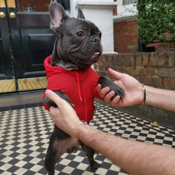 French bulldog Raincoat Red Colour - Standing picture