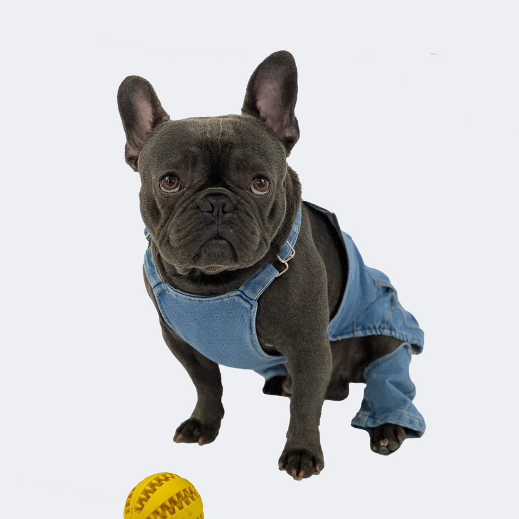Dapper French bulldog Jeans, French Bulldog Denim Pants