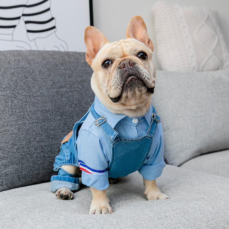 Small dog pants - Frenchi dog model wearing denim and shirt on sofa