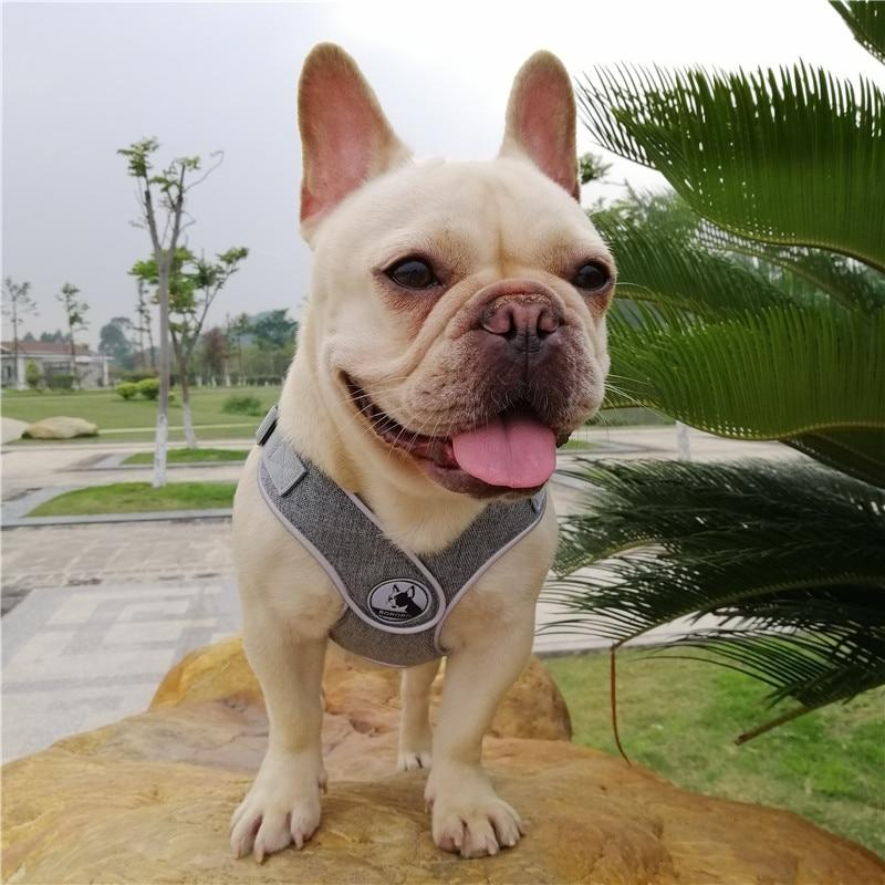Grey French Bulldog No pull Harness front view - model wearing size M