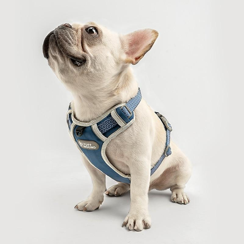 French Bulldog Nylon Harness - Model wearing Blue Colour