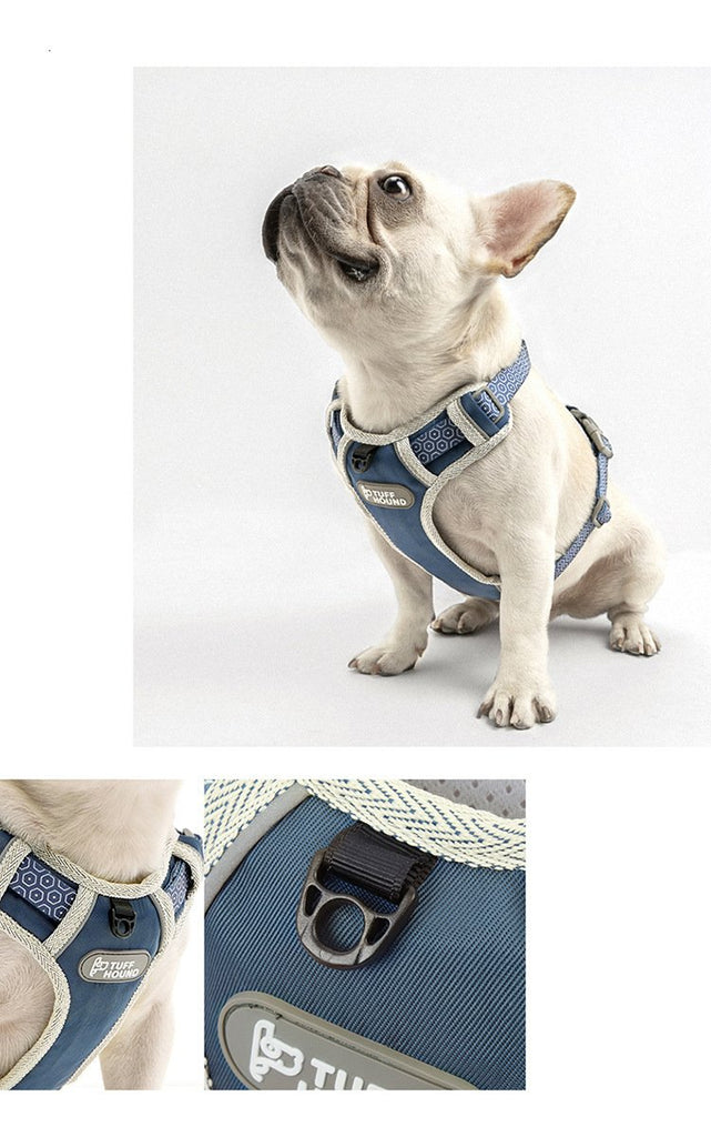 French Bulldog Nylon Harness - Model wearing Blue Colour Lifestyle Image