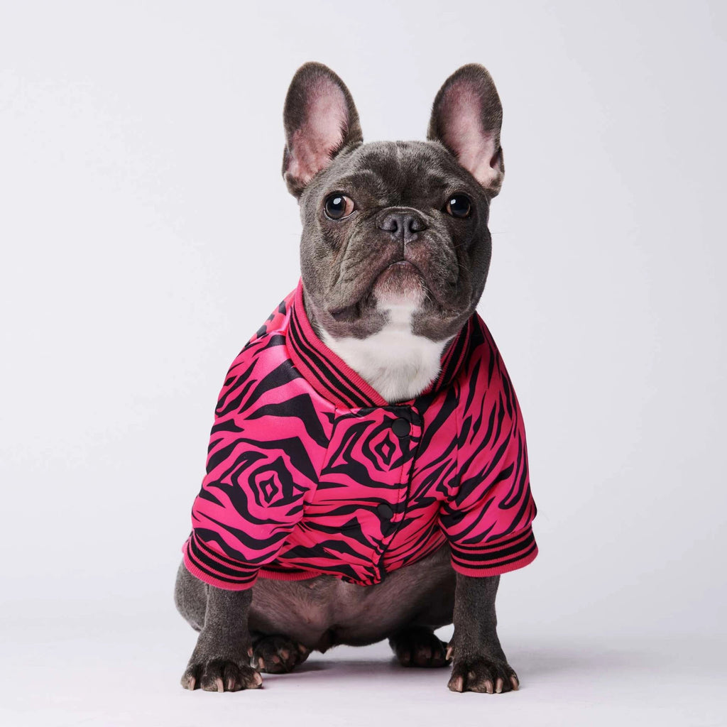 Zebra Print French Bulldog Jacket, Zebra Print French Bulldog Cardigan