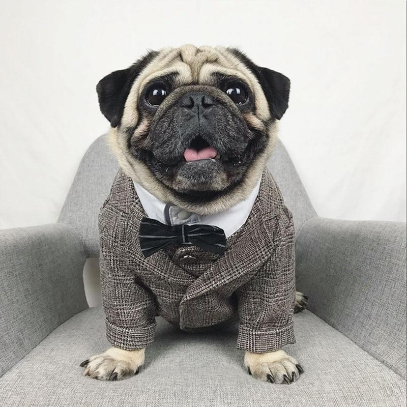 Pug formal jacket, wedding Pug jacket