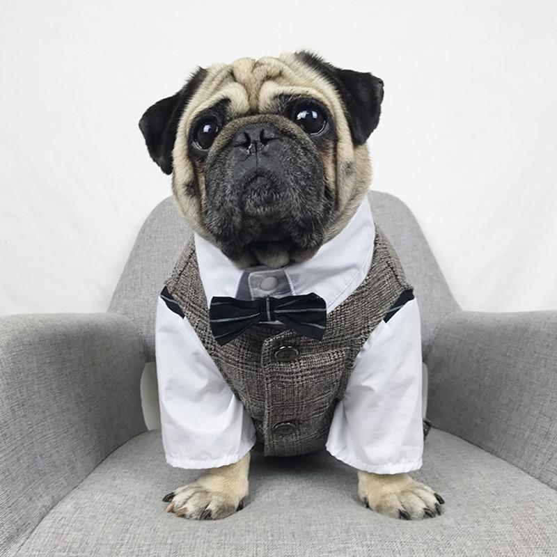 Pug formal vest, wedding Pug vest