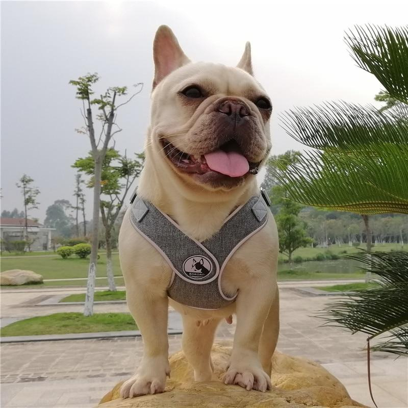 Grey French Bulldog No pull Harness - Model wearing product