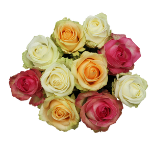 Lovely Colours - Allure by Berg Roses