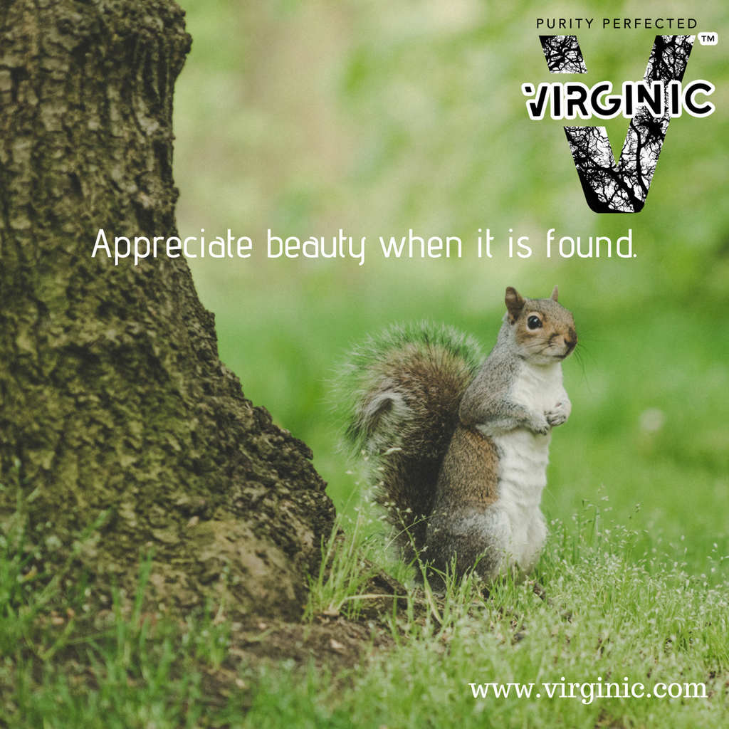 Appreciate beauty when it is found