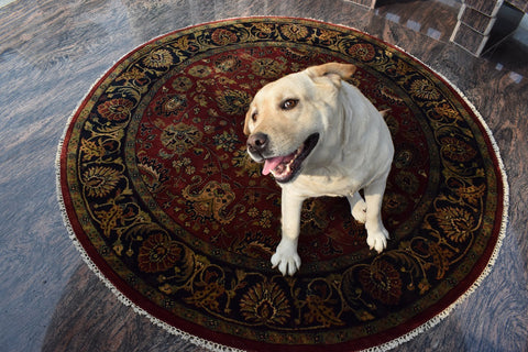 Rug and Dog by The Rug Decor