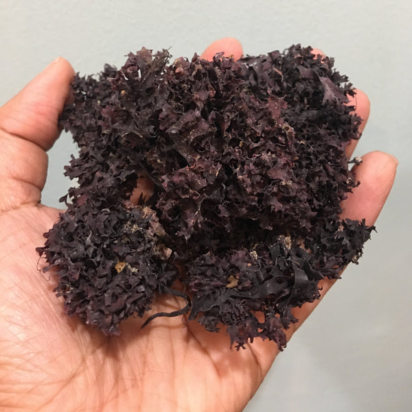 purple Irish sea moss