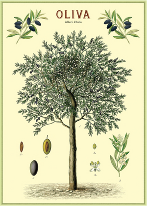 Olive Tree: 20x28 Poster