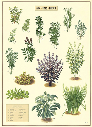Aux Fines Herbs: 20x28 Poster