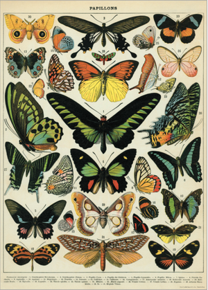 Butterfly: 20x28 Poster