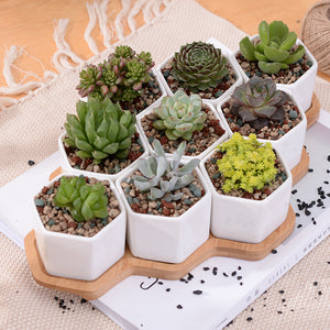 Set of 9 Hexagon Flowerpots, Ornament, Nordic Home Accessories, Elm & Blue, Style Life Home