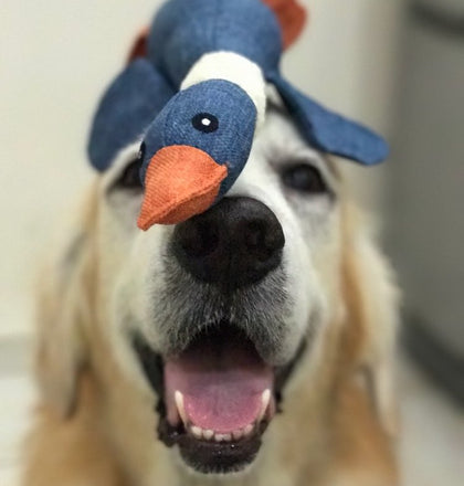 Squeaky Duck Chew Toy