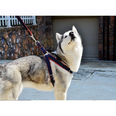 Jean chest Dog Harness and Leash (2 Pcs/set)