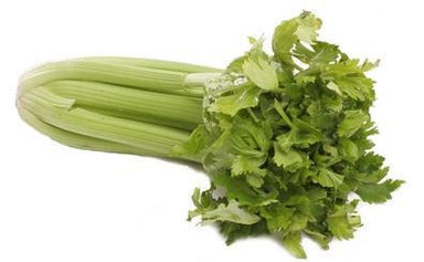 Celery-Fresh Connection-Fresh Connection