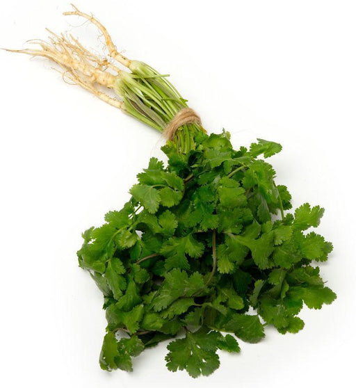 Coriander-Fresh Connection-Fresh Connection
