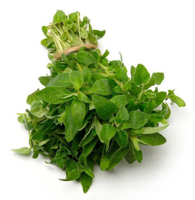 Oregano-Fresh Connection-Fresh Connection