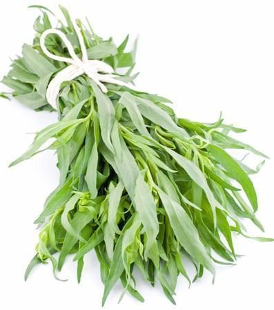Tarragon-Fresh Connection-Fresh Connection