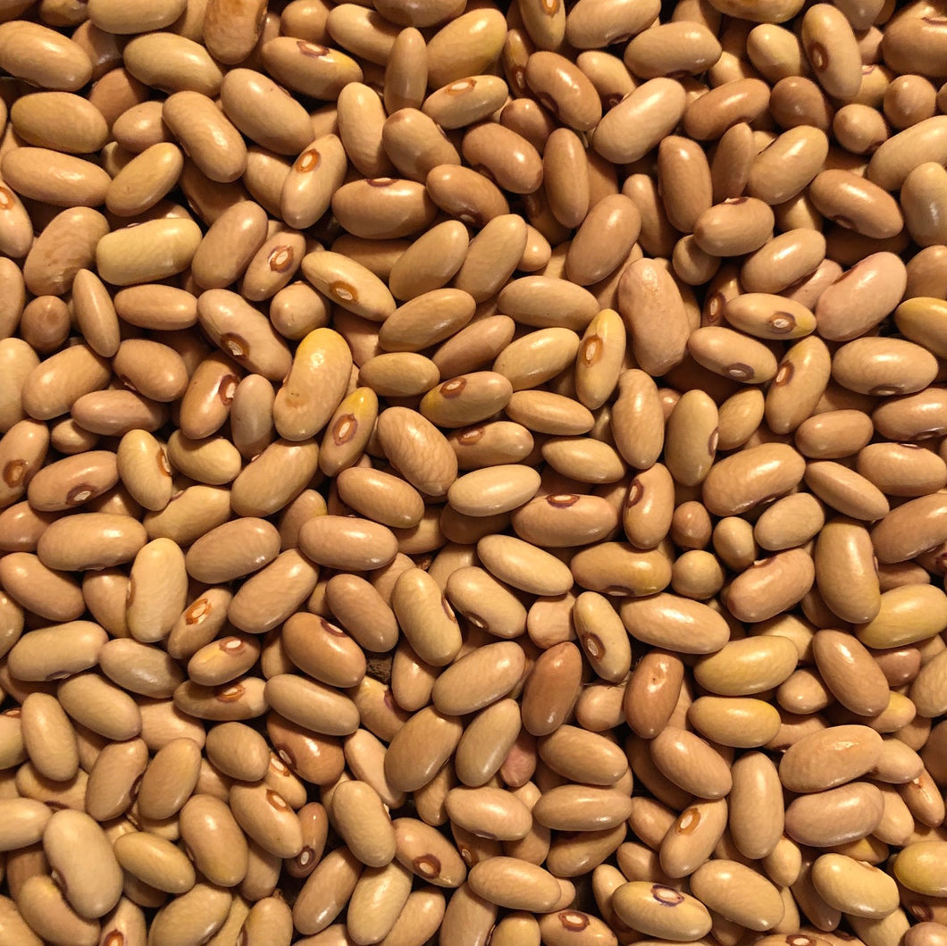 Arikara Yellow Bean