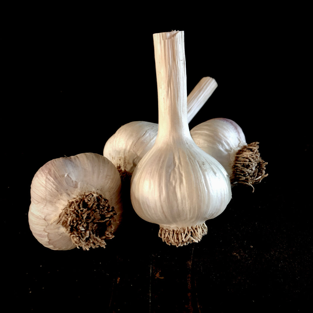 French Porcelain Garlic