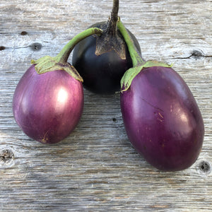 Guryn Black Beauty Eggplant