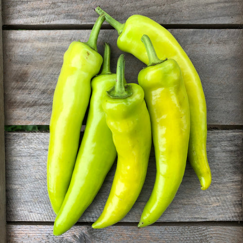 Hungarian Hot Wax Pepper (Margaretta's Mistake)