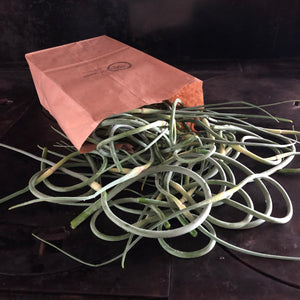 Organic Garlic Scapes (Local Pickup Only)