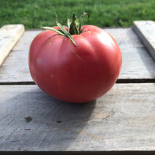 Sam Hiebert Mennonite Tomato