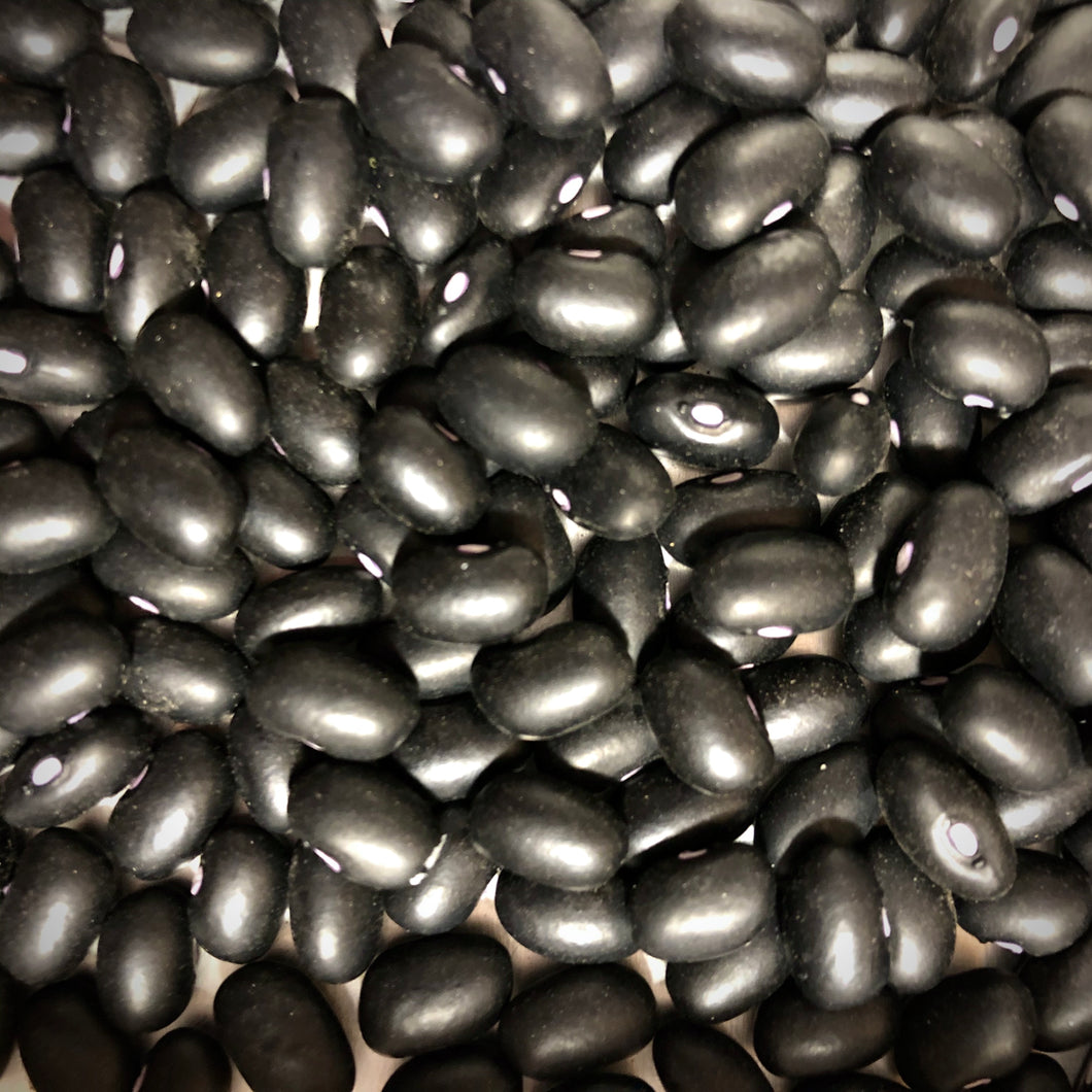 Midnight Black Turtle Dry Bean