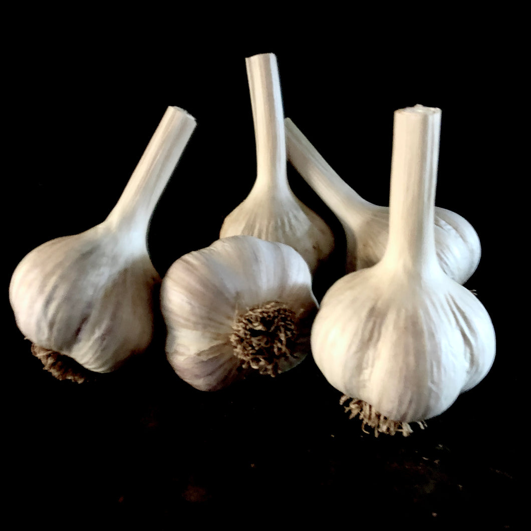 Mennonite (Geisbrecht) Garlic