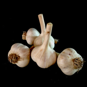 Northern Quebec Garlic