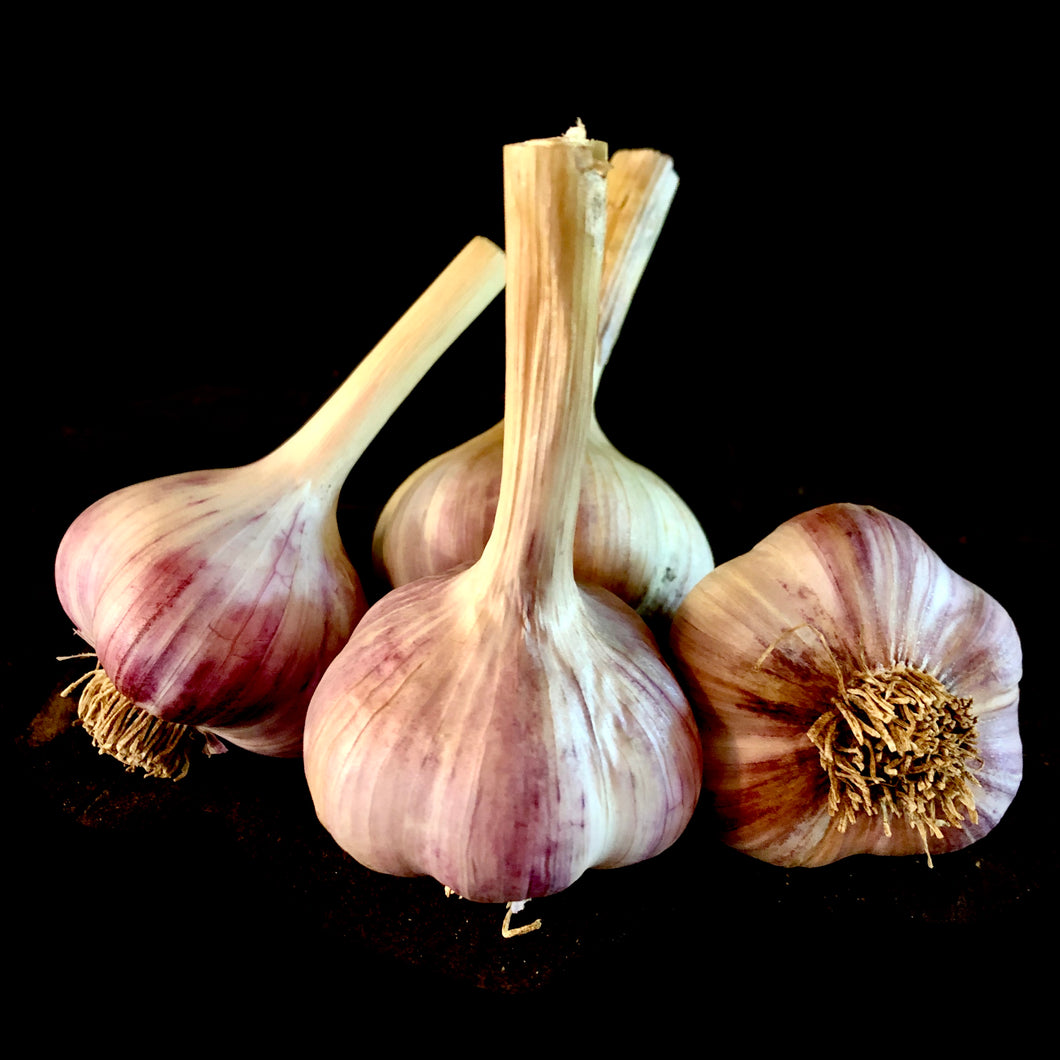 Purple Russian Garlic