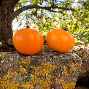 Woodle Orange Tomato