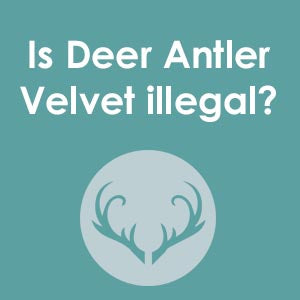 Deer antler velvet is legal