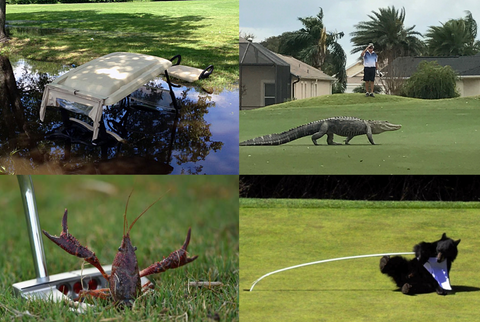 animals revenge on golf courses