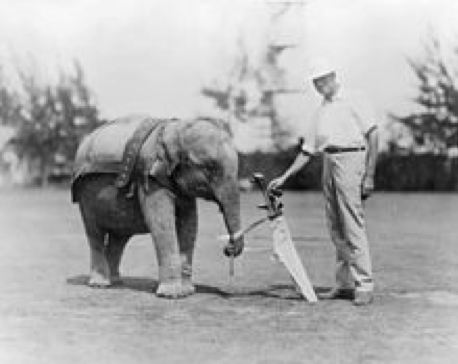 a baby elephant as a golf caddy