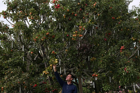 250 varieties of apple achieved by horticulturalist Paul Barnett