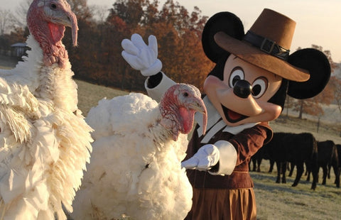turkeys at the thanksgiving disney holiday parade