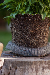 wire mesh baskets for plants