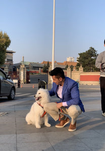 On a paved footpath, a white fluffy dog sits next to a man who has crouched down to pat him. The man (author Peter Li) wears a blue sports coat, cream pants and running shoes.