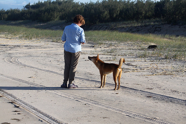 Rowena and dingo Bold facing each other on the beach.